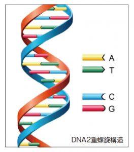 2013.11-DNA